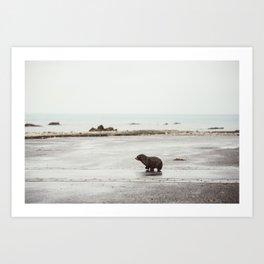 Pup seal crossing the road Art Print