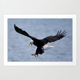 Bald Eagle Attack Art Print