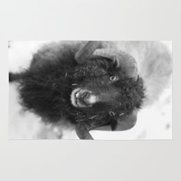 The black sheep, black and white photography Rug
