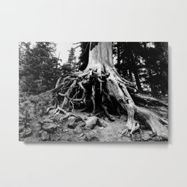 Mt. Hood Tree Roots Metal Print