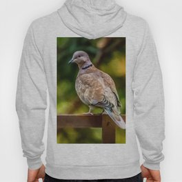 Collared Dove Hoody