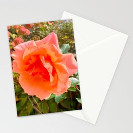 Peach Rose in Bloom - Photography Art Stationery Cards