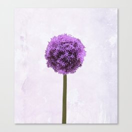 A most remarkable perfection Canvas Print