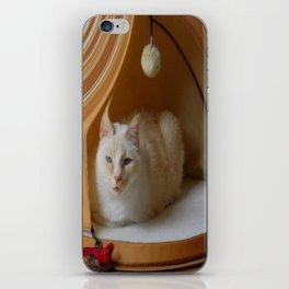 My cat is my zen master iPhone Skin
