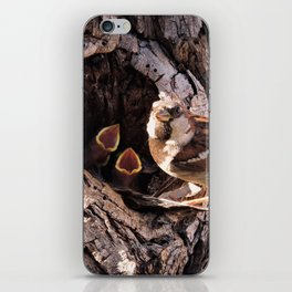 House Sparrow Keeping House iPhone Skin