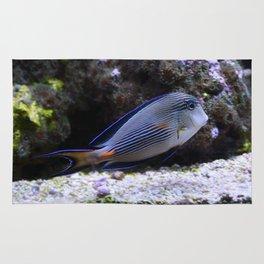 Sea World Colorful Fish Rug