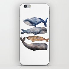 Whales // Fashion Illustration iPhone & iPod Skin