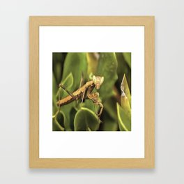 Praying Mantis On Green Garden Background Framed Art Print