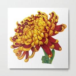 Floral Theme- Chrysanthemum Watercolor Flower Metal Print