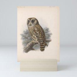 Fulvous Owl4 Mini Art Print