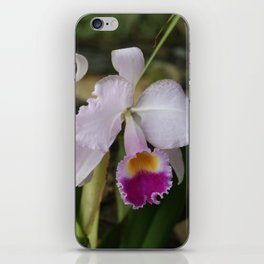 Tropical Flowers Orchids iPhone Skin