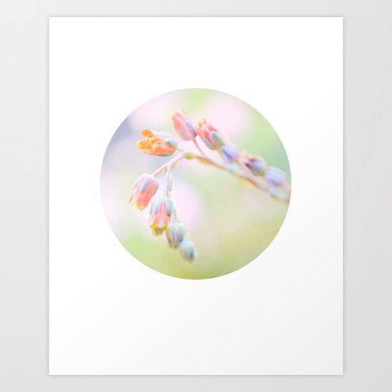 Circle Print, Succulent in Bloom No. 2 Art Print