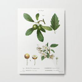 1. Southern crabapple, Malus sempervirens 2. Siberian crabapple, Malus baccata from Traité des Arbre Metal Print