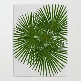 Fan Palm, Tropical Decor Poster