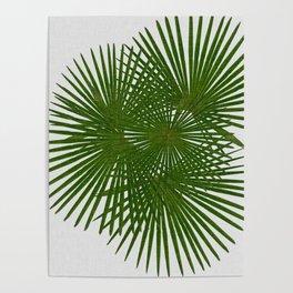 Fan Palm, Tropical Decor Poster