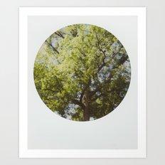 White Oak Instant Photo Art Print