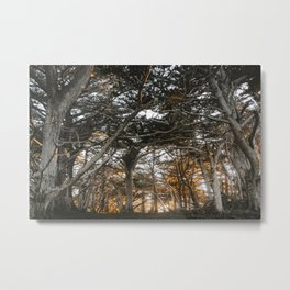 Golden Light Through The Trees Metal Print