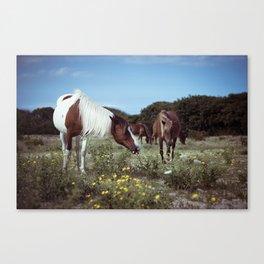 ponies Canvas Print