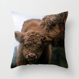 Scottish Highland Cattle Calves - Babies playing Throw Pillow