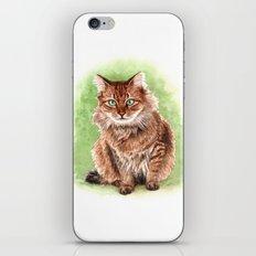 Somali cat portrait iPhone Skin