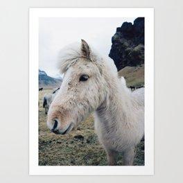 White Horse in Iceland Art Print