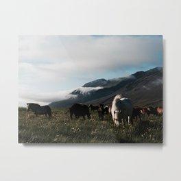 Grazing Herd Metal Print
