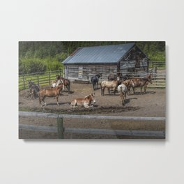 Western Horses at an outfitters corral in Montana Metal Print