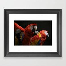 Bird with a Feather Framed Art Print