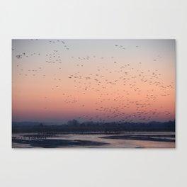 Sandhill Cranes at Sunrise on the Platte River Canvas Print