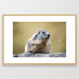 Portait of a marmot Framed Art Print