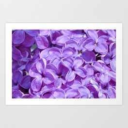 Purple Lilacs by Teresa Thompson Art Print