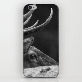Rain Falls on a Bull Roosevelt Elk in Redwood National Park iPhone Skin