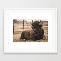 buffalo Framed Art Prints featuring Buffalo  by Rob Hawkins Photography