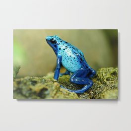 Exotic Blue Frog Metal Print