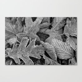 Frosty Leaves BW 01 Canvas Print