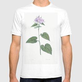 Morning-glory from La Botanique de J J Rousseau by Pierre-Joseph Redoute (1759-1840) T-shirt