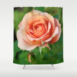 Garden pink rose flower blooming and two rose buds Shower Curtain