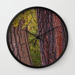 AUTUMN MAPLE AND PINE BARK Wall Clock