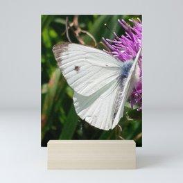 LARGE CABBAGE WHITE BUTTERFLY FEEDING ON KNAPWEED Mini Art Print