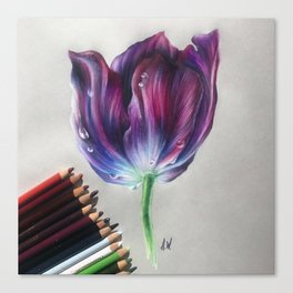 """Tulip"" Drawing Canvas Print"