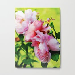 So preciously pink Metal Print