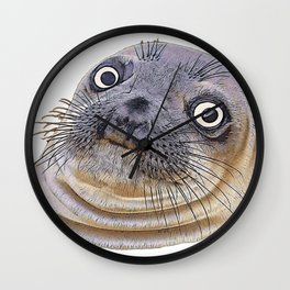 Seal Face Funny Pinnipeds Afraid Mistake Caught Act Wall Clock