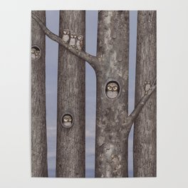 owls in trees Poster