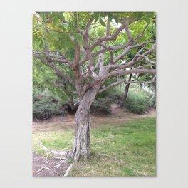Twisted Tree Canvas Print