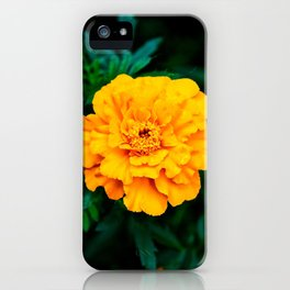 Tangerine Beauty iPhone Case