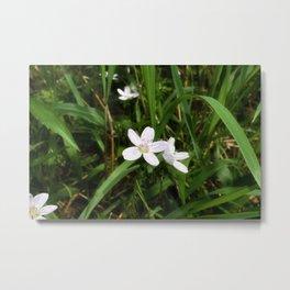 Spring Beauty 06 Metal Print
