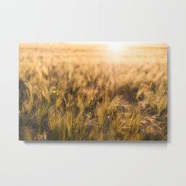Golden fields sunset Metal Print