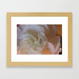 Translucent Carnation  Framed Art Print