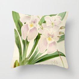 Miltoniopsis vexillaria 'The Flag-Like Miltoniopsis' 1873 Throw Pillow