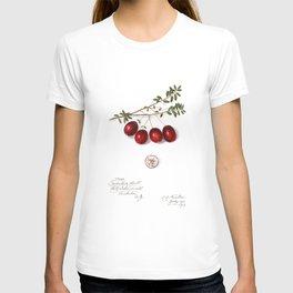 Cranberry T-shirt